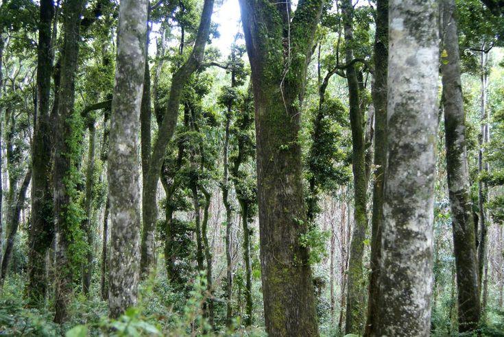 Los bosques del Sur de Chile tienen algo demasiado mágico <3