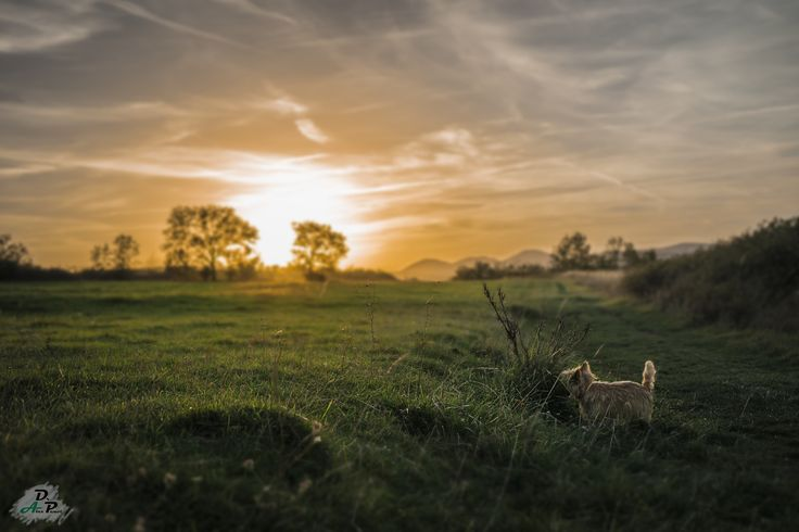 Doggy in Sunset Land by Dr. Alex Penot on 500px