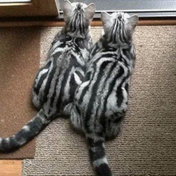 Men S Cute Cat Lovely Pet Print 3d Hoodie Casual Sale Price