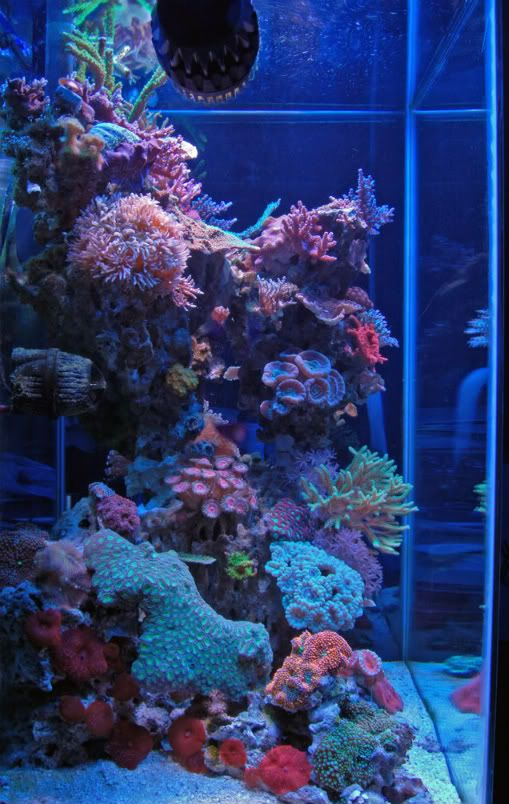 Show me your pillars page 3 reef central online for Aquarium recifal nano