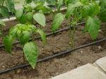 Závlahové systémy - Kapková závlaha skleníku