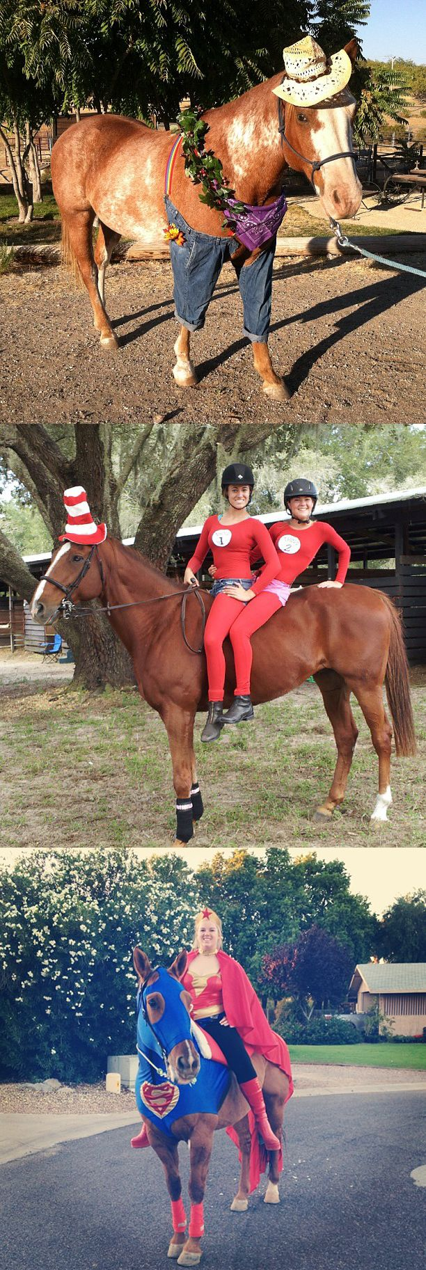 Halloween might be these horses least favorite holiday.