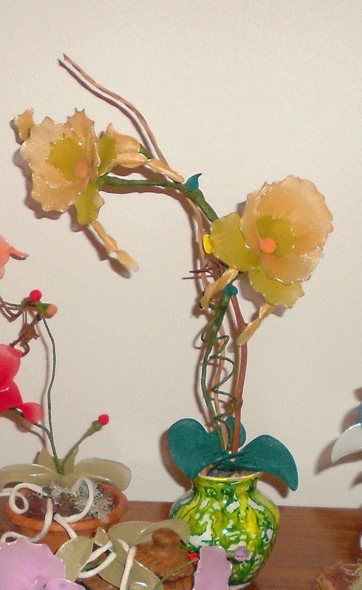 orchidea verde di collant di filanca