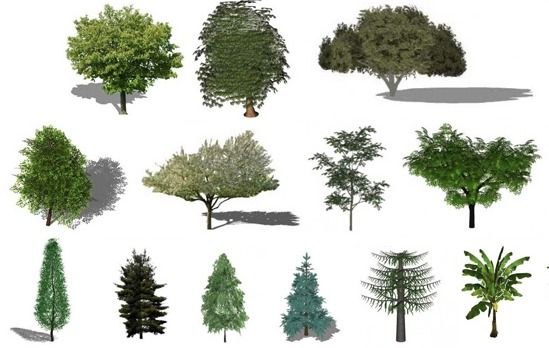 Gallery of Refresh the Greenery in your Renders with this Free Library of Plants for SketchUp - 1