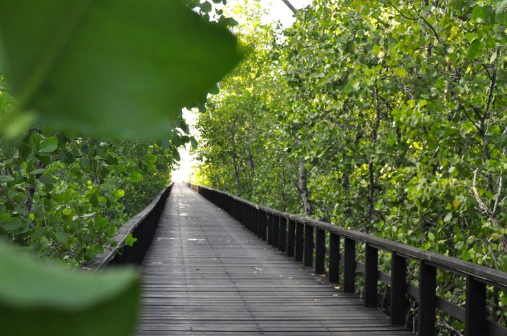 lovely mangrove pathway Grand Luley Resort - Manado