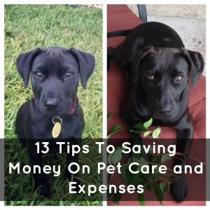 Saving Money on pet care | via @Karen ~ SavingTheFamilyMoney.com