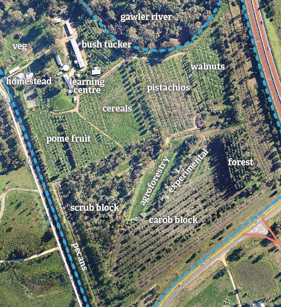 Forest Forest (Hillier, Australia del Sur) - Annemarie y Graham Brookman - Aprendiz de Permacultura