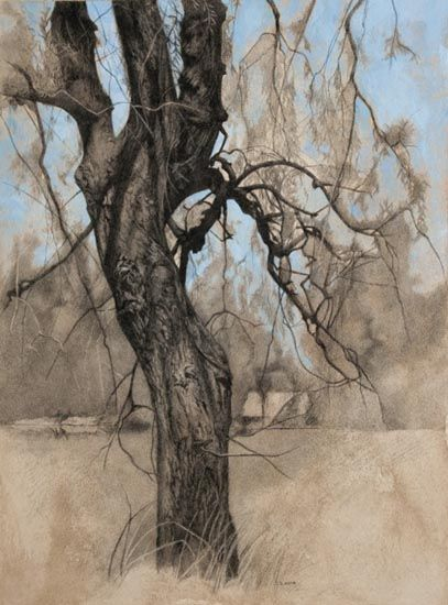 """Denise Antaya - Tree Study 10.5"""" x 14.5"""" Carbon pencil and Acrylic on toned paper"""