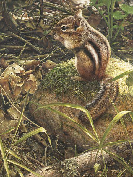 "Stunning Wildlife Paintings by Denis Mayer Jr. Vancouver,  Canada.                         ""Backyard Companion"""