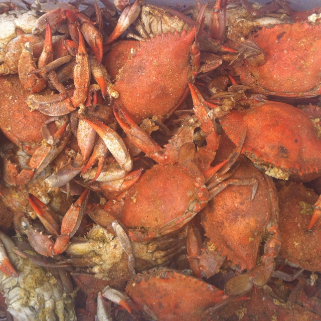 MD crabs with Old Bay--celebrate with a crab feast with the family every summer!