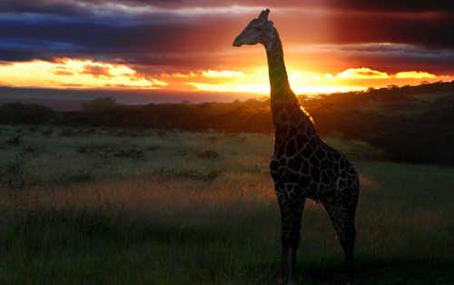 African Wildlife Safari Experience at www.karkloofsafarispa.com