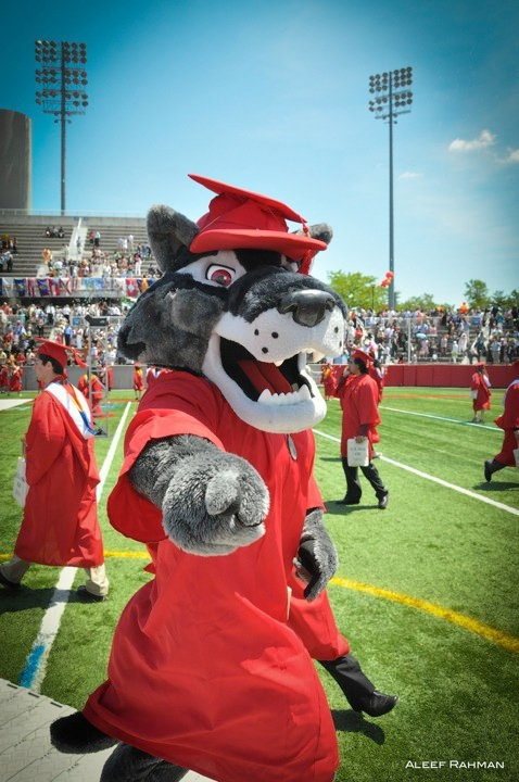 Wolfie - Stony Brook University