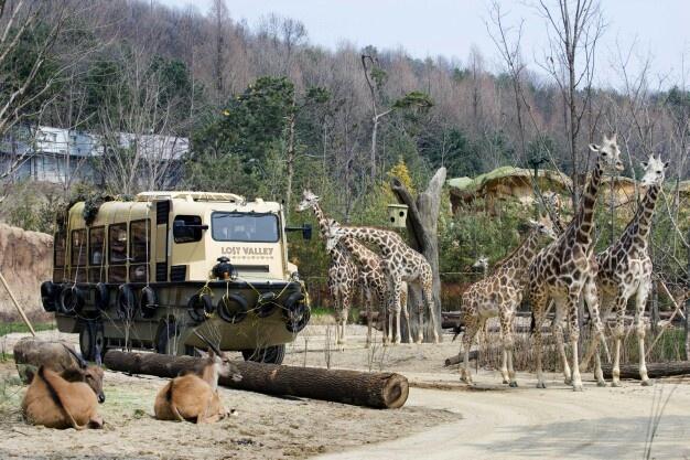 수륙양용차 타고 떠나는 에버랜드 생태형 사파리 '로스트 밸리(Lost Valley)    (Everland safari adventure 'Lost Valley' in Korea)