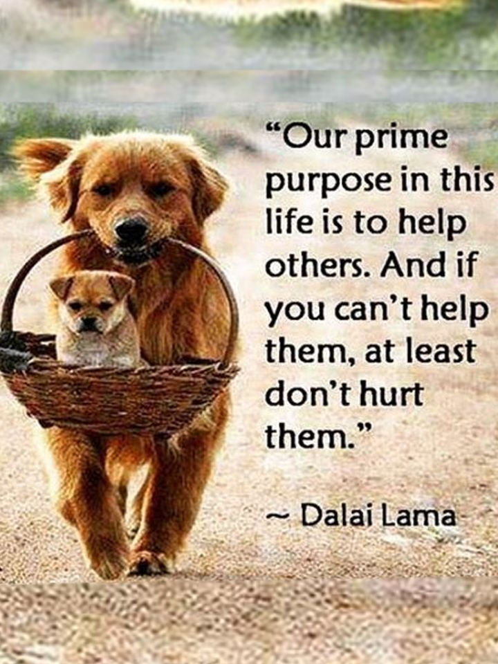 What is our prime Purpose?