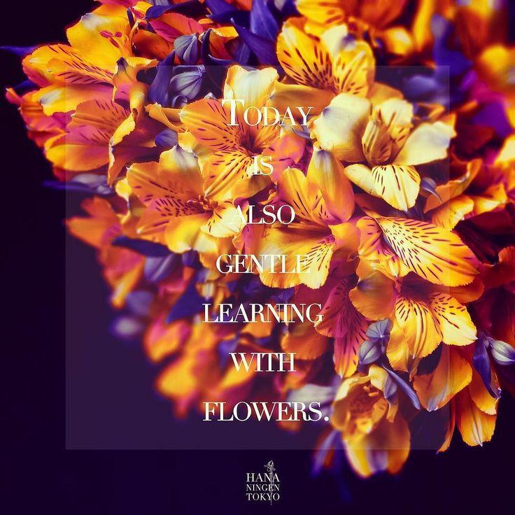 おはようございます今日も謙虚に平和に花に触れ合う時間をくれた今日に感謝してHANANINGENを発芽させて頂きます #hananingen  #flowers