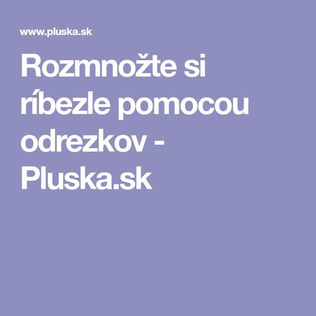 Rozmnožte si ríbezle pomocou odrezkov - Pluska.sk