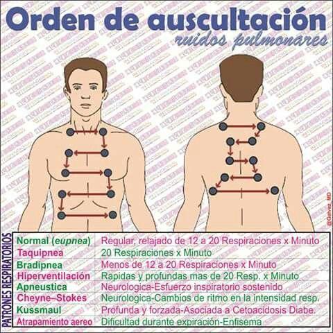 AUSCULTAR: Escuchar los sonidos que se producen en el interior de un organismo humano o animal, especialmente en la cavidad torácica y abdominal