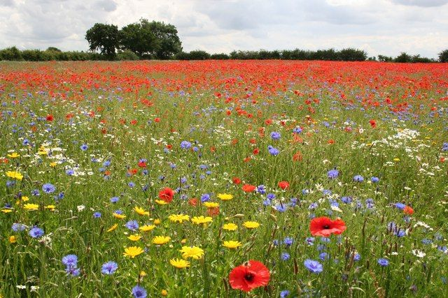 Discover the natural beauty of wild flower meadows throughout the UK http://bit.ly/2ml3AEo