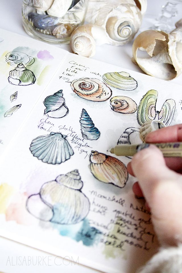 Not loving the seashells, but would like to do similar little images of... different fish species or something, bits of info scrawled in the spaces