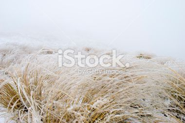 Ice on Tussock Grass, New Zealand Royalty Free Stock Photo
