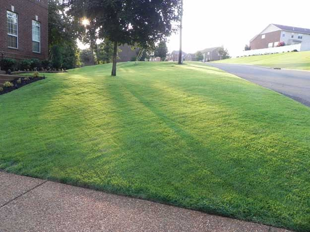 How to Grow Zoysia Grass From Seed | Zoysias.com