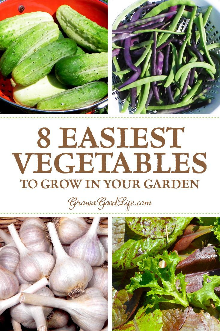 8 Easiest Vegetables To Grow In Your Garden Easy Vegetables To