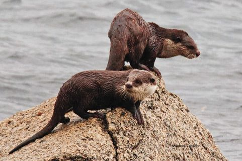 # 5 Hike at least one major South African trail, like the Otter Hiking Trail.