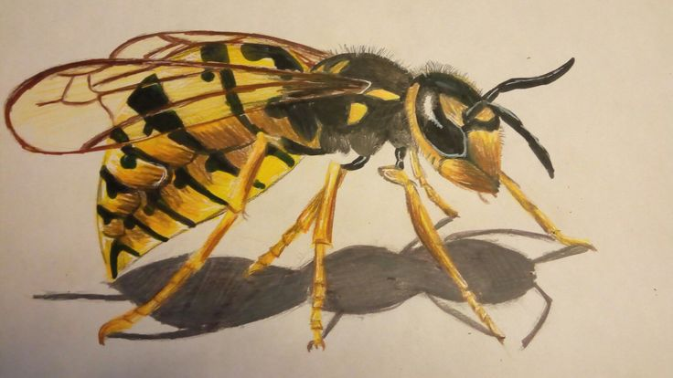 Malovaná vosa (Painted wasp)