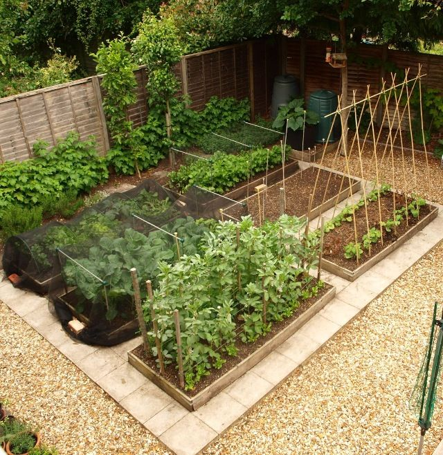 really nice neat and tidy vegetable garden layout for small spaces and you can grow a lot in a small space
