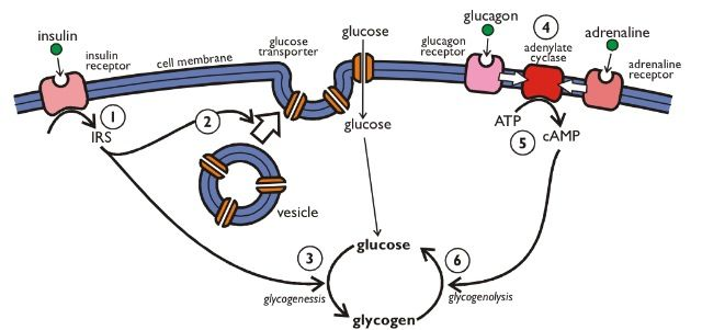 15 best a level biotechnology images on pinterest