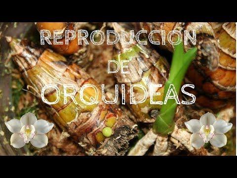 orquideas terapia de botella - YouTube