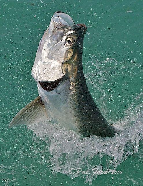 Top Tarpon Tips #saltwaterfishing | Saltwater Fishing
