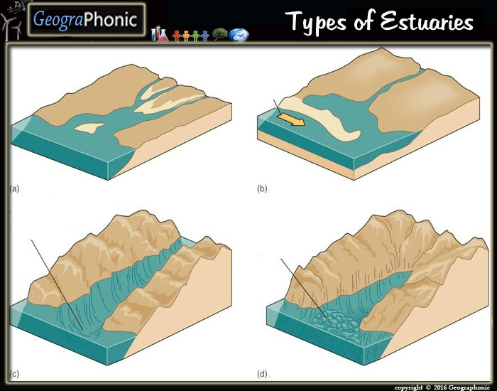 10 Best Estuary Images On Pinterest Quizzes Games Geography And