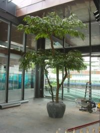 Longifolium schermen kunstboom | Kunstplant.nl -Kunstplanten, kunstbomen, kunstbloemen, potten en bakken