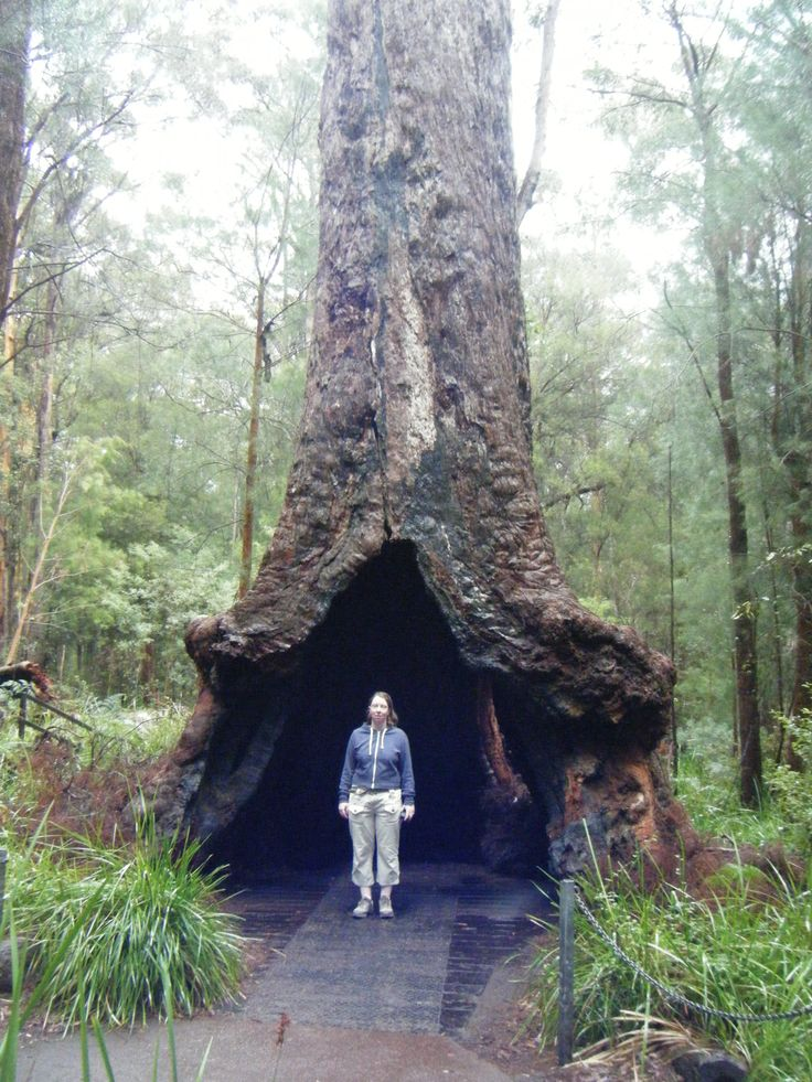 Base walk at Valley of the Giants, Western Australia.