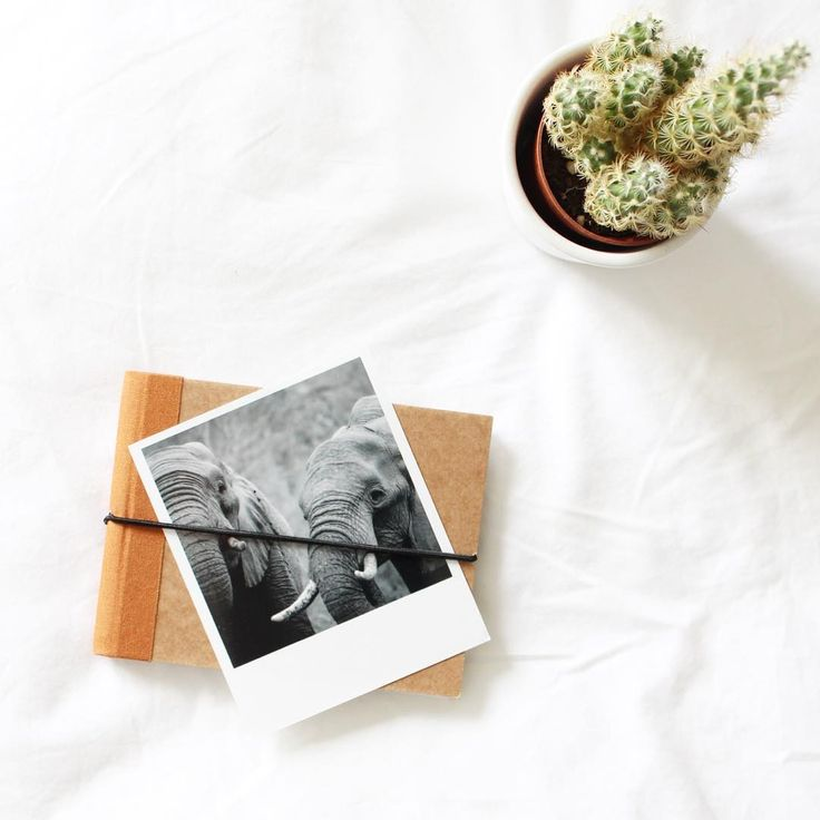 #polaroid #polaroids #developedpic #photoinspiration #instax #instaxphoto #travelphotos #squaredone