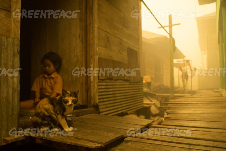 Haze in Central Kalimantan Child and cat seen at Sei Ahass village, where the air is engulfed with thick haze from the forest fires. Kapuas district in Central Kalimantan province on Borneo island, Indonesia.  These fires are a threat to the health of millions. Smoke from landscape fires kills an estimated 110,000 people every year across Southeast Asia, mostly as a result of heart and lung problems, and weakening newborn babies.