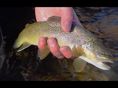 Winter Fly Fishing Trick to Catch More Fish - Fly Fishing and Dreams - (More info on: https://1-W-W.COM/fishing/winter-fly-fishing-trick-to-catch-more-fish-fly-fishing-and-dreams/)