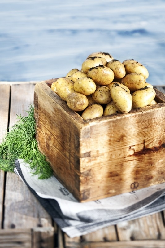 Finnish early potatoes - just add butter.