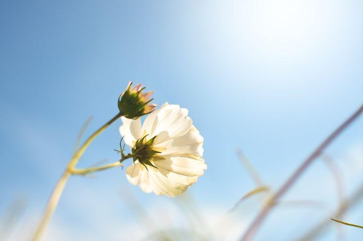 A primavera traz a confiança de que somos mais fortes do que imaginamos, afinal, resistimos a mais um inverno!