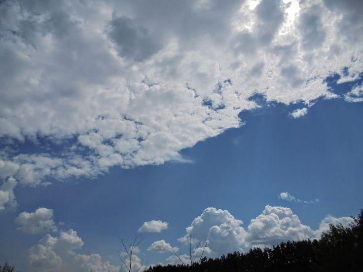 Фото - летопись  г. Кемерово и Кемеровской области(Фотоблог автора): Поход за малиной. Кемерово. ч2