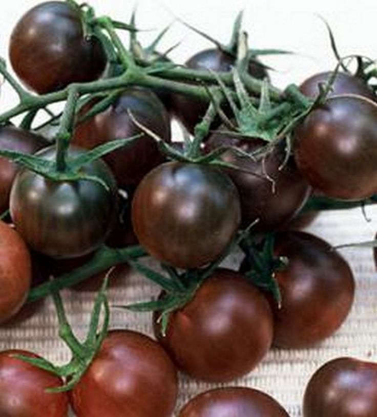 TOMATO BLACK CHERRY                Rich in flavor these dusky black tomatoes grape-sized tomatoes are a must have.