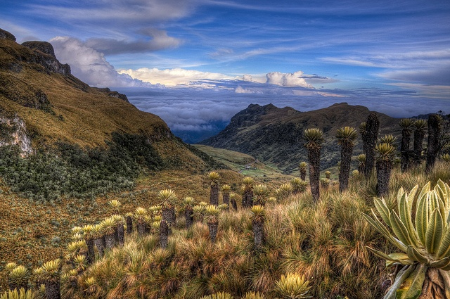 Hiking in PNN Los Nevados (Colombia). 'The snow-covered peaks of Parque Nacional…