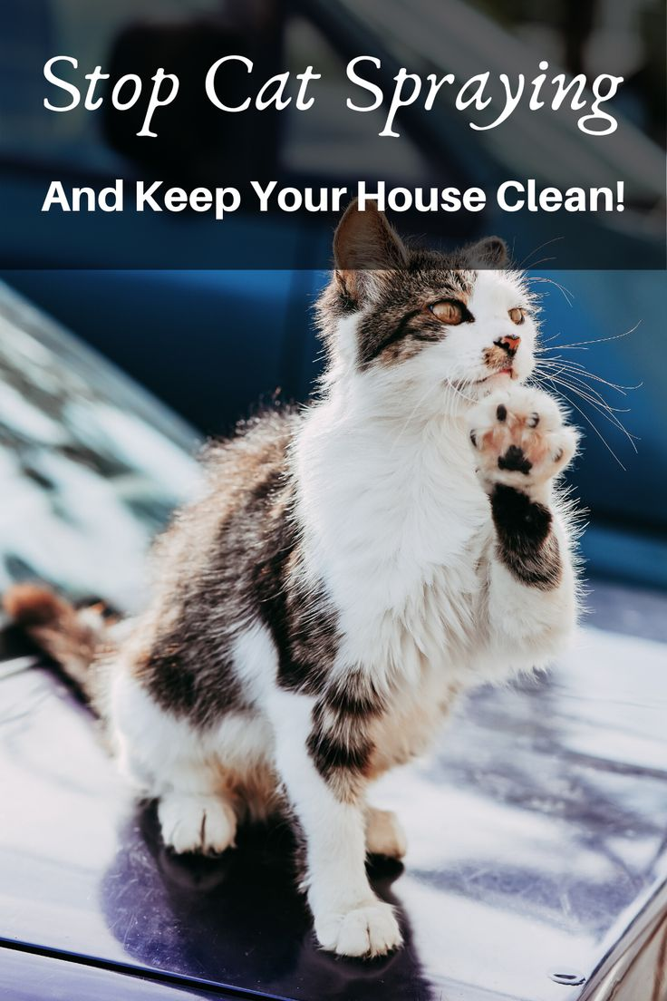 Stop Cat Spaying And Keep Your House Clean! in 2020 Cat