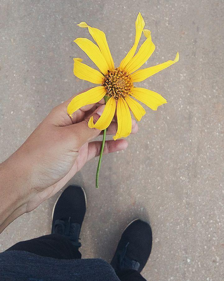 """72 curtidas, 1 comentários - Pedro Moura💢 (@pedrocigas) no Instagram: """"As flores são bonitas em qualquer lugar do mundo, muita gente tem forma mas não tem conteúdo 🌻🌻"""""""