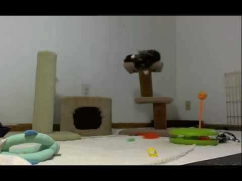 Kitten Cam Tower Fail and Win