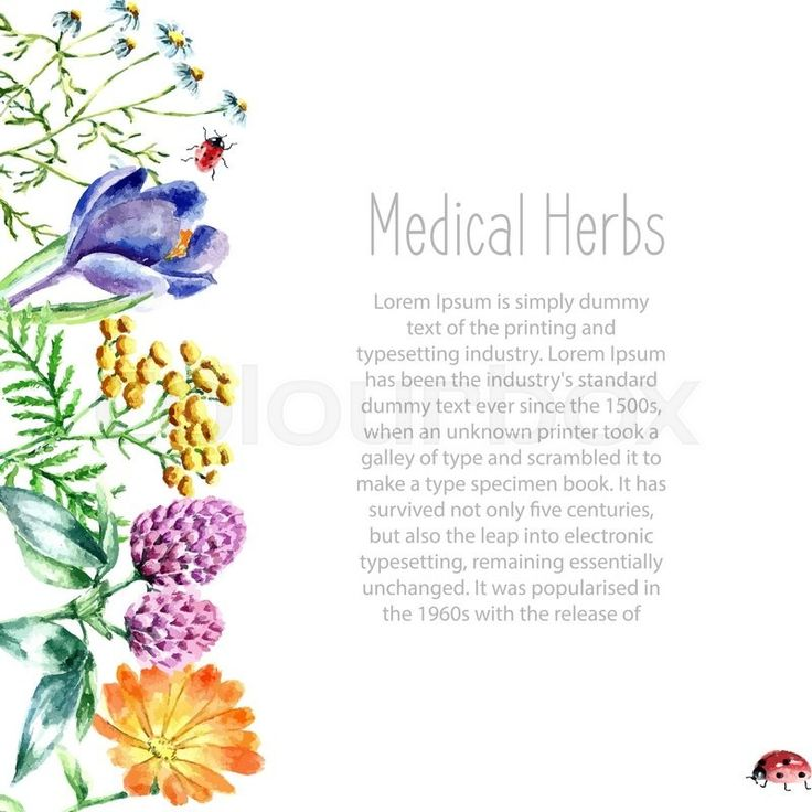 Kitchen Herbarium Art: Best 25+ Herbs Illustration Ideas On Pinterest
