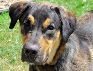 Humane Society Of Parkersburg Parkersburg Wv 304 422 5541