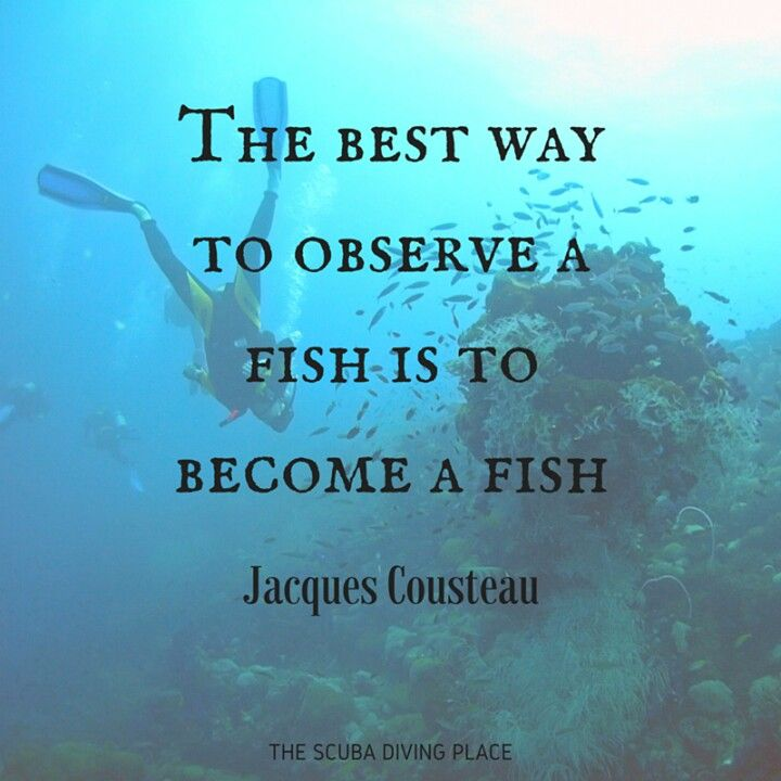 Quotes About Water: 1000+ Diving Quotes On Pinterest