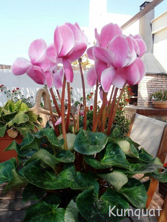 149 mejores im genes sobre plantas sombra en pinterest for Lista de plantas de sombra